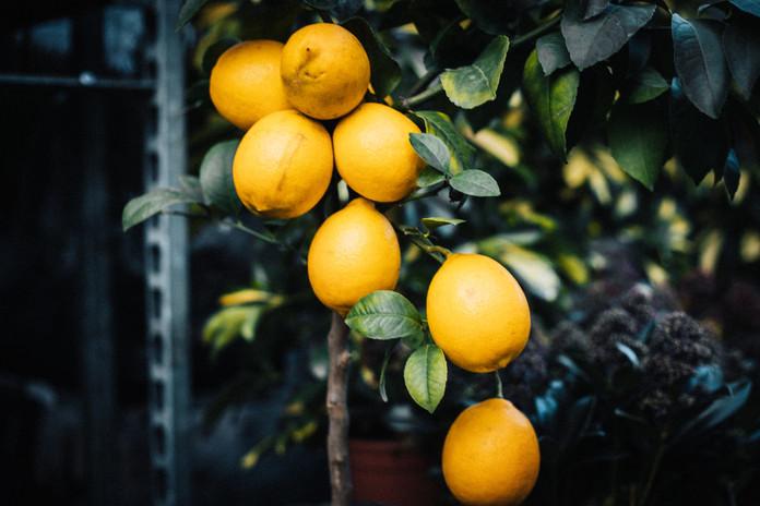 Lemons at Columbia Road