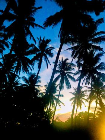 Palms on Nusa Penida