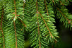 木質種類和性質