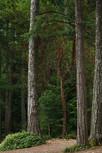 淺談系列:選材 - 森林篇