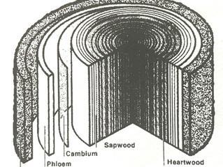 木材構造組成