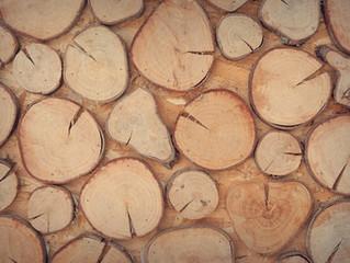 美檜、越檜是什麼? 台灣市場上最常見的幾種檜木