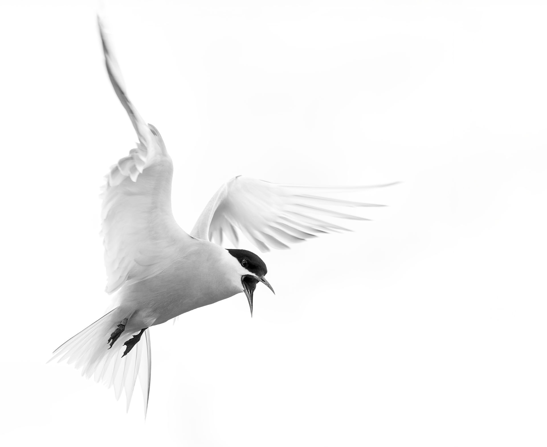 11 About Tern