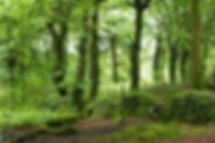 Steeple-woods-St-Ives-735x490.jpg