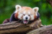 animal-close-up-cute-146290.jpg