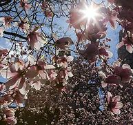 עץ אביבי