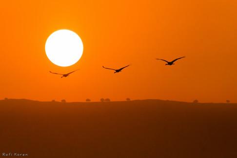 Golan Heights sunrise
