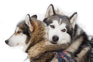 Lovers, Lapland