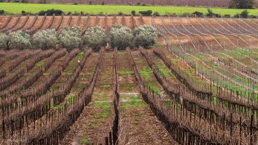 Rows, Israel
