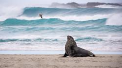Sea lion and seagull