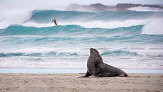 Sandfly beach, New Zealand