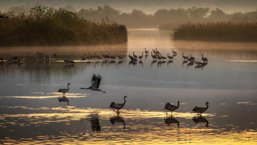 Agamon Hula Nature reserve