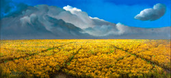 FIELD AND SKY (sold) 24 X 48
