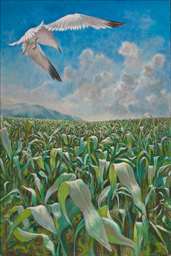 BIRD AND CORNFIELD 36 x 24