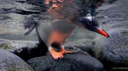 sea-birds01-gentoo-penguin_18248_600x450