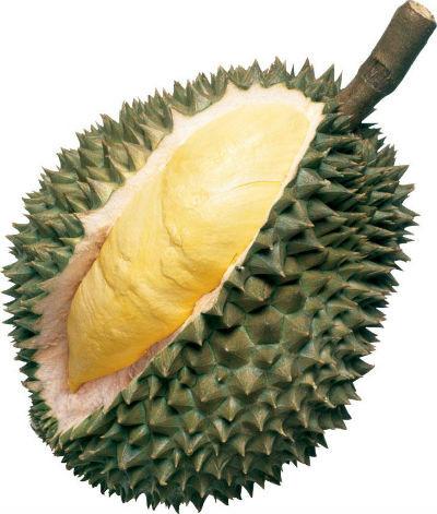 fruit - durian