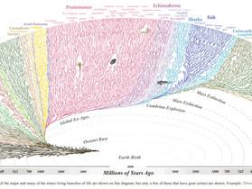 Biomim'agile : 3,8 milliards d'années de Tests et d'Apprentissages pour inspirer l'Agilité