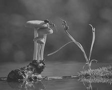 mushroom-nature-macro-photography-vyache
