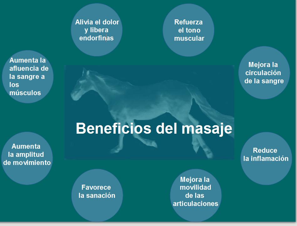 silueta caballo beneficios masaje