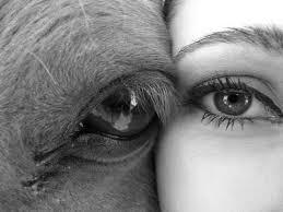 Ojo caballo humano