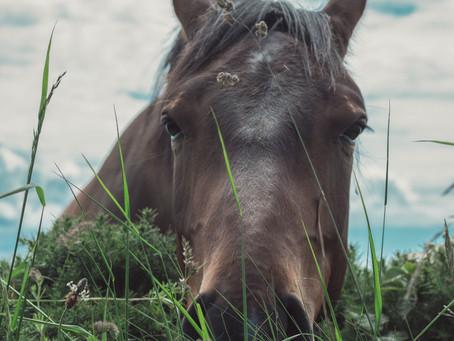 Como piensa tu caballo? En imagenes