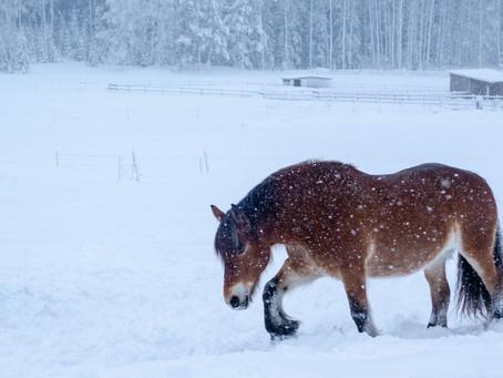 3 Datos raros pero ciertos sobre los caballos en invierno