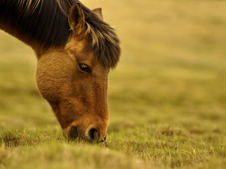 Defensas: el sistema inmune del caballo