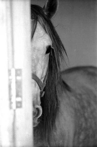 caballo tímido