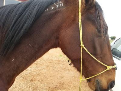 Acupuntura en caballos