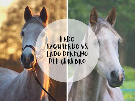 """Las personas tienen personalidad, pero los caballos tienen """"caballo-nalidad""""?"""