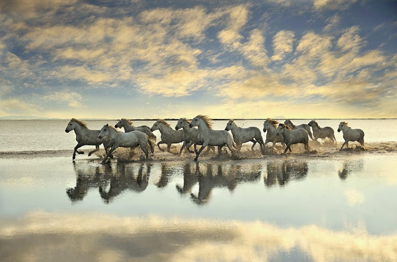 caballos corriendo en el agua