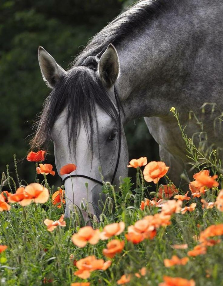 Caballo oliendo flores