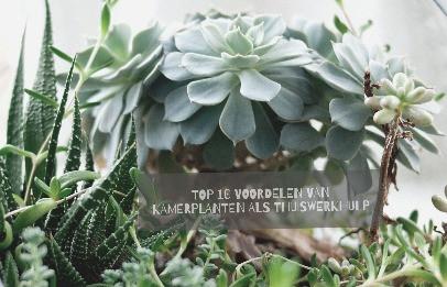 Vetplantjes in een glazen bol