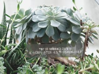 DE 10 VOORDELEN VAN KAMERPLANTEN ALS THUISWERKHULP