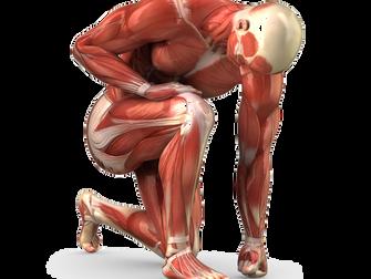 Les blessures musculaires chez le sportif !