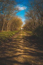 Balfour Castle wood lined path.jpg