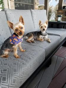 Bentley & Harley being comfy
