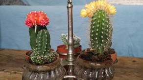 Le carrousel des cactus