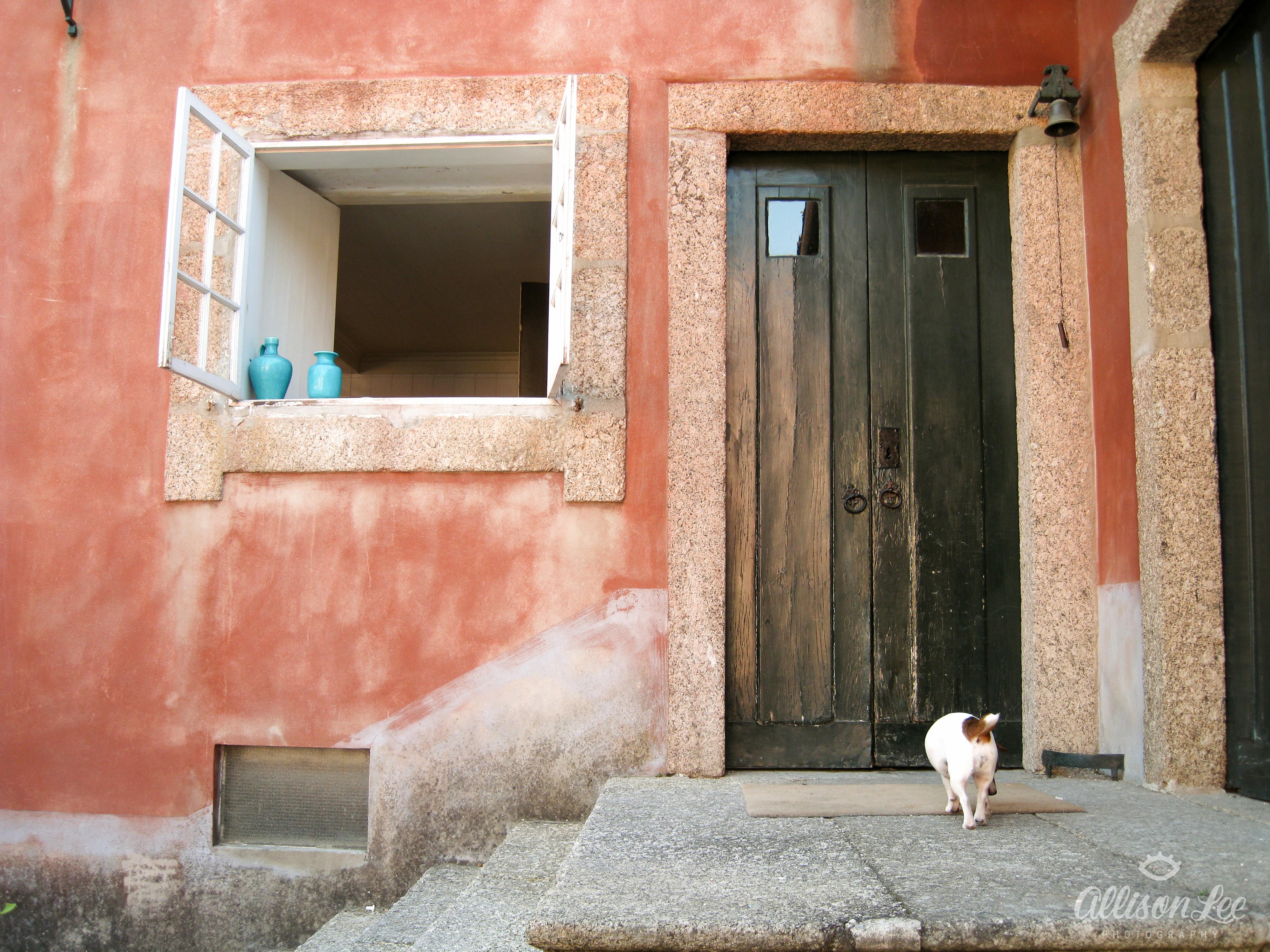 Portuguese Pup
