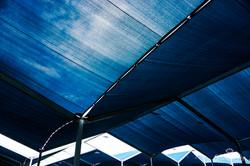 Blue Shade-08510
