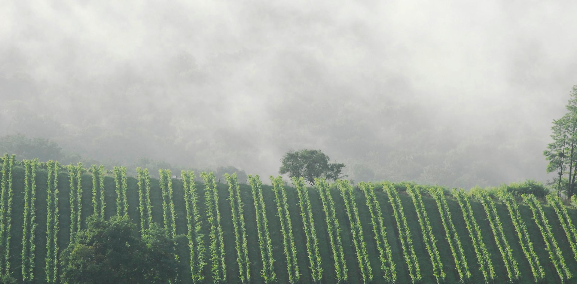 La brume du Printemps au Gimbois