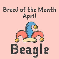 April Breed of the Month.jpg