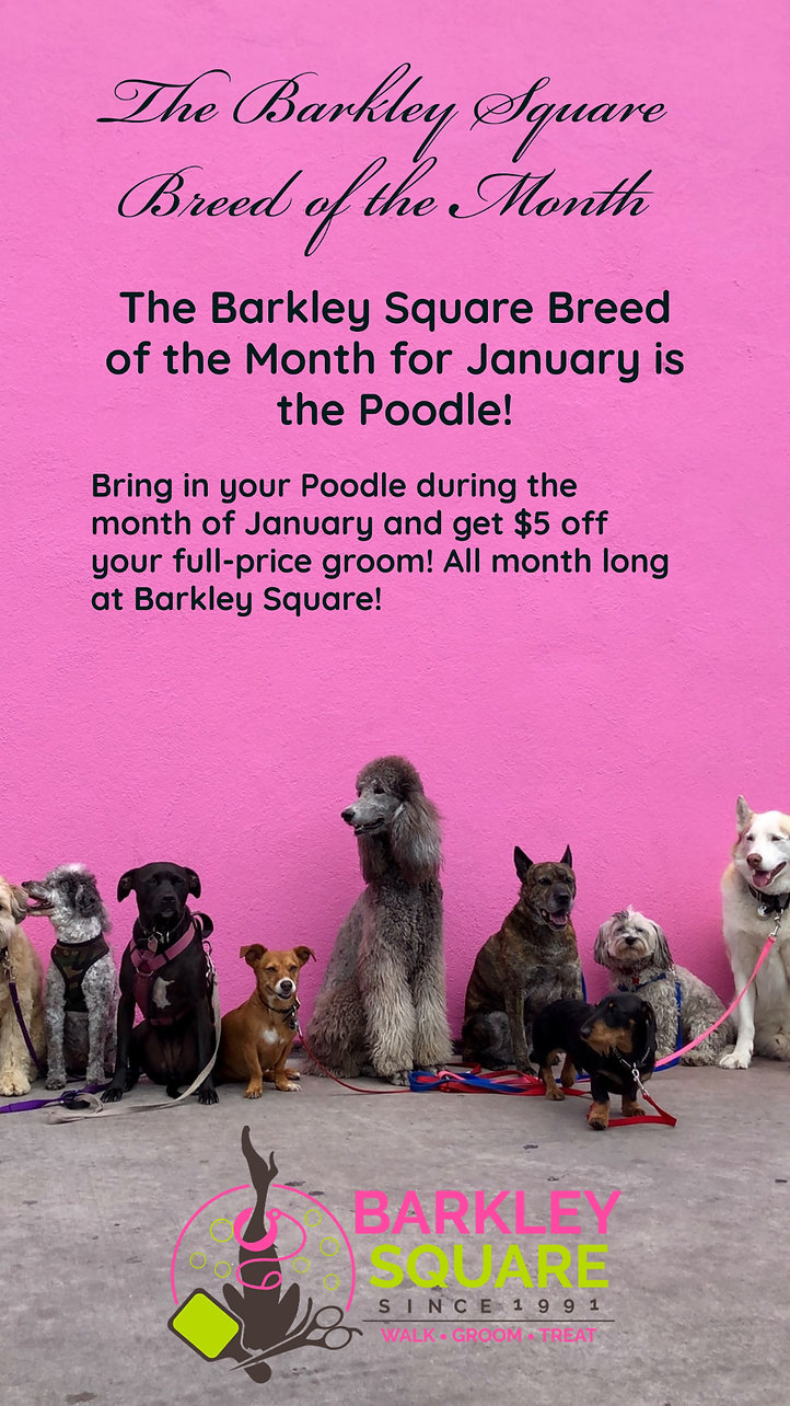 Breed of the Month Jan.jpg