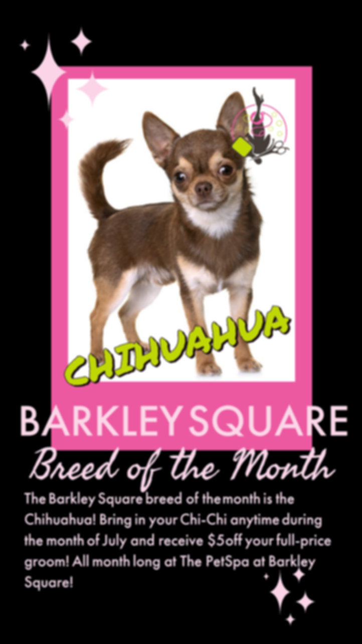 Breed of the Month Chihuahua.jpg