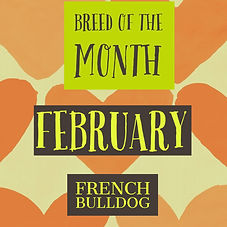 February Breed of the Month.jpg
