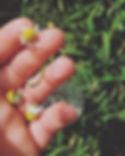 ❊ oh sweet darling chamomilla...jpg