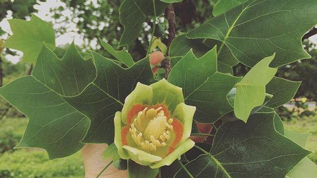 flower & plant essences