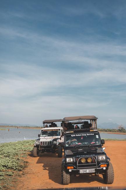 sri-lanka-safari