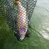 Huge rainbow trout on leech pattern