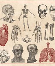 [直播]美國NAHA高階芳療師認證班☆解剖生理學-直播線上課程☆2021年7月21日起週三下午班